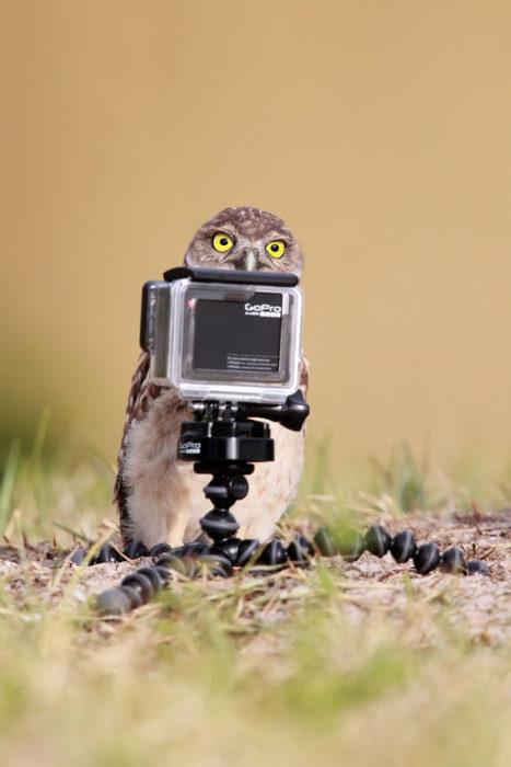 ave detrás de una cámara go pro