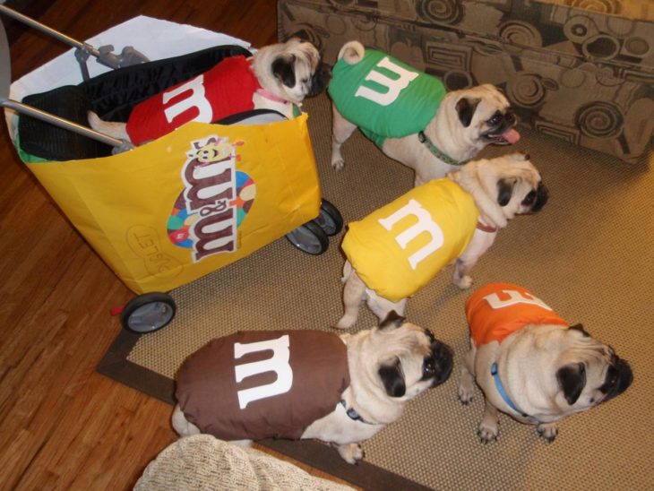 perritos vestidos de m&m's