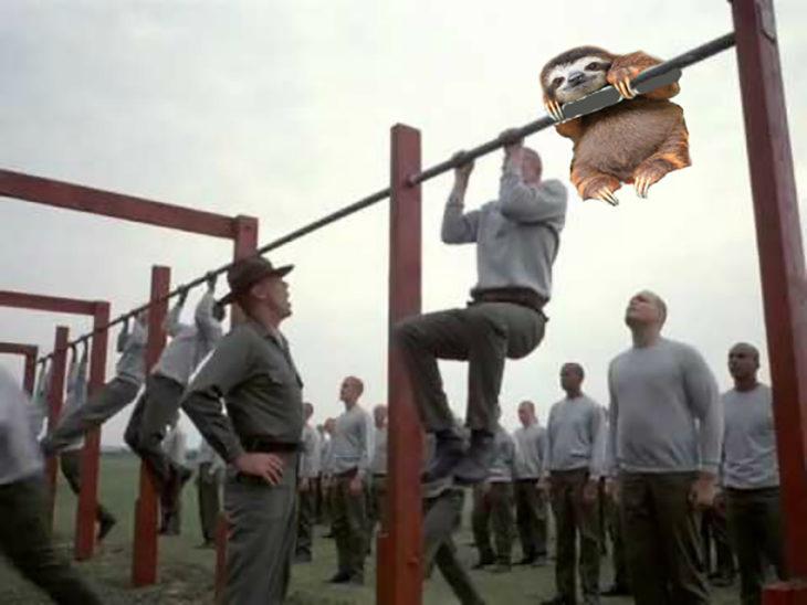 perezoso en entrenamiento militar