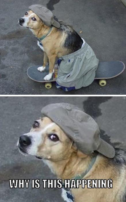 perro sobre una patineta