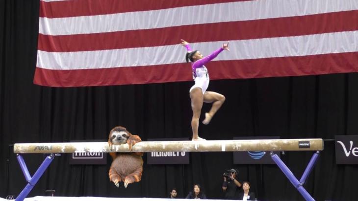 perezoso en concurso de gimnasia artística