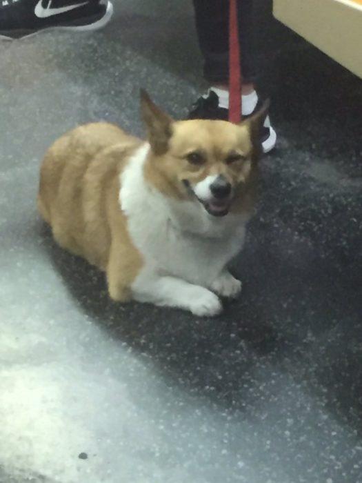 perro guiñando ojo
