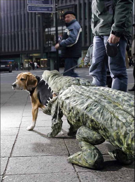 perro disfrazado de ataque de cocodrilo