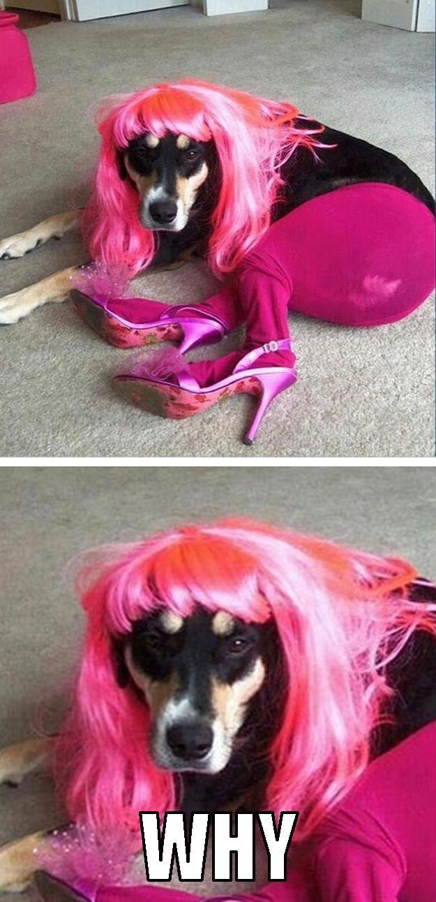 perro con peluca y medias rosas