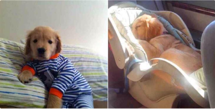 perrito vestido de bebé
