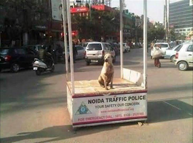 perrito en punto de policía de tráfico