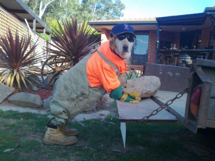 perrito vestido de trabajador de obra