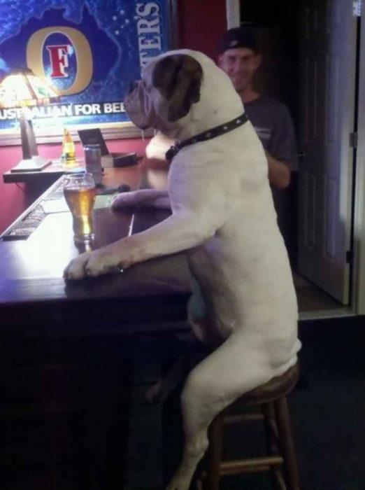perro sentado en un bar