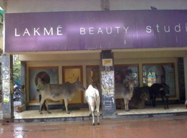 vacas en centros comerciales