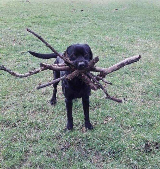 perro con muchas varitas en el ocico