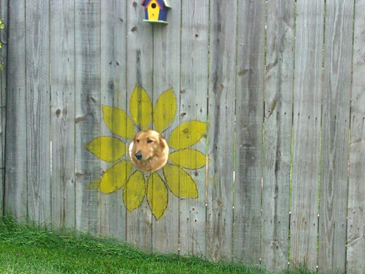 perrito ve a través de la barda en un agujero que está pintado como una flor