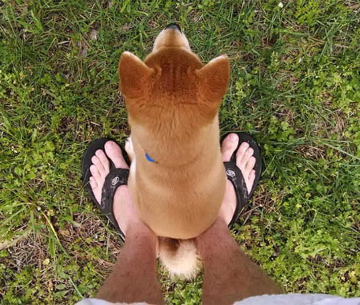 perro sentado en los pies de una persona