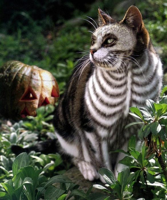 gato pintado de calavera