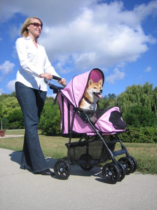mujer llevando a perro dentro de una carreola