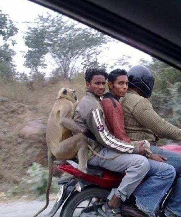 muchachos y primate en motocicleta
