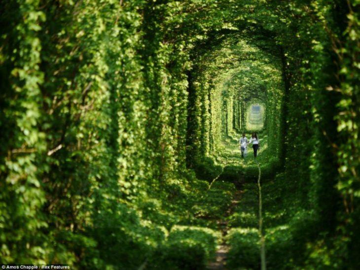 tunel lleno de hierbas