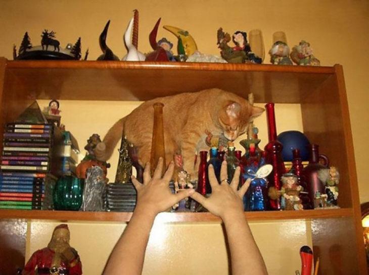 gato en un estante lleno de cosas de vidrio
