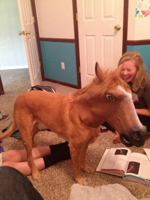 perro con cabeza de caballo