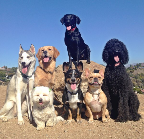 pandilla de perros