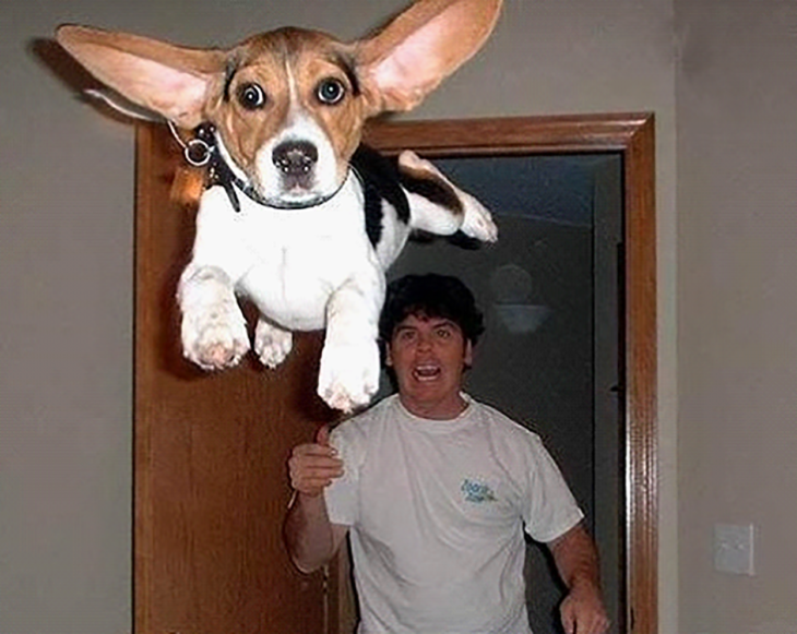 perro flotando