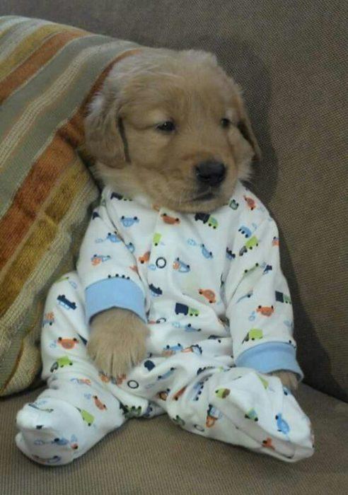cachorro en ropa de bebé