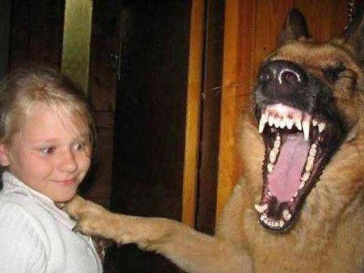 perro bostezando parece que sonríe