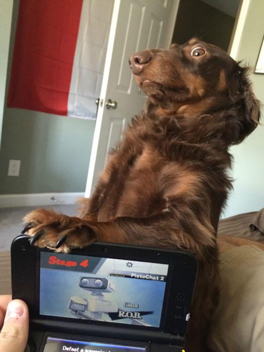 perro con expresión graciosa con una pata en videojuegos