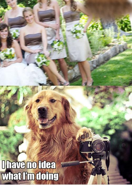 perro tomando fotos