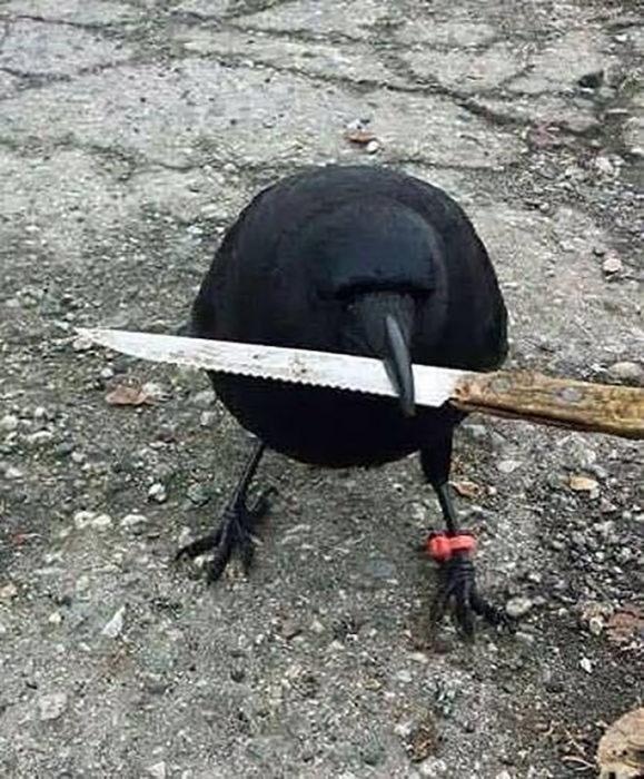 pájaro con cuchillo