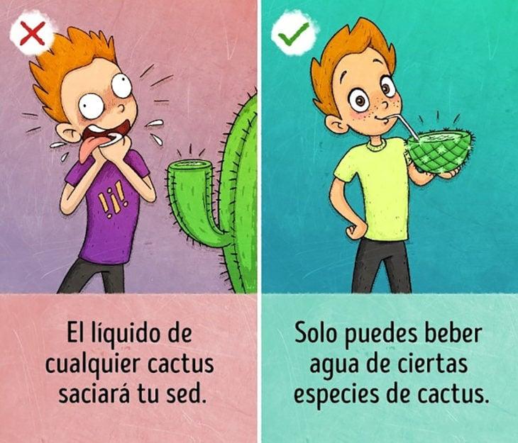 ilustración tomar agua de cactus