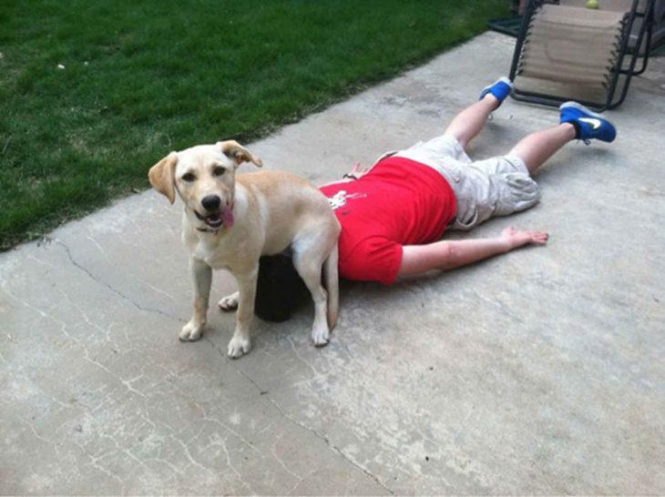 perro sentado en cabeza de una persona