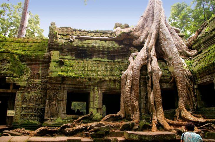 templo bajo las raices de un arbol