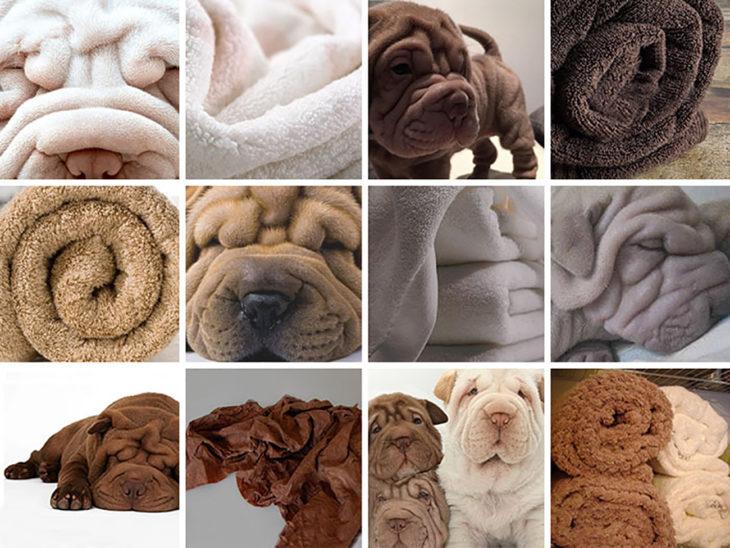 perrito shar pei y toallas