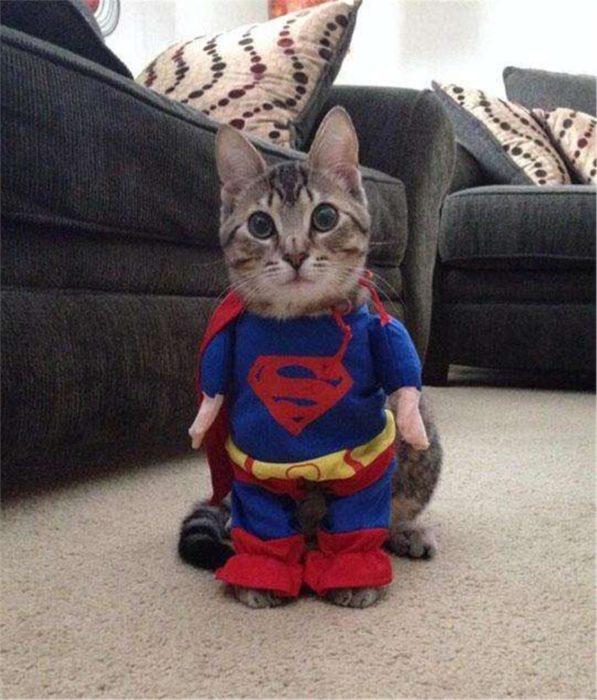 gato disfrazado de supercat