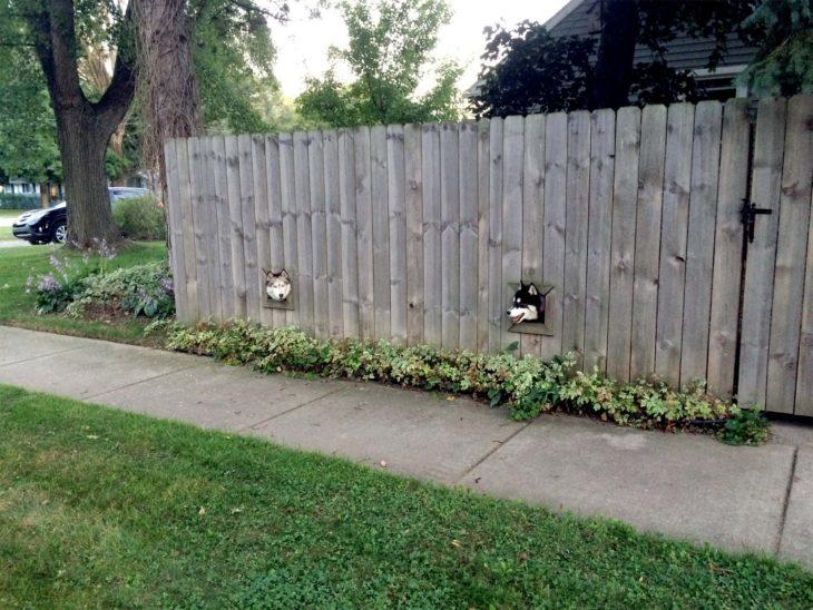 huskys ven al exterior a través de agujeros en las bardas
