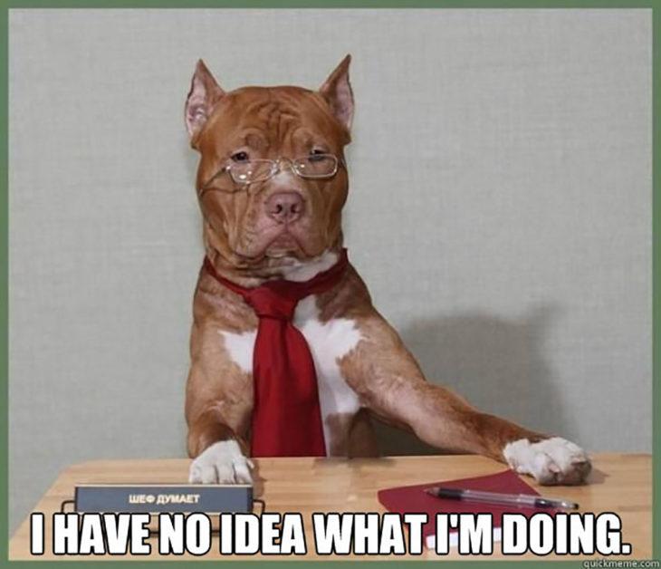 perro en escritorio con corbata