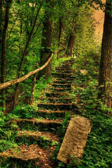escaleras llenas de hierba