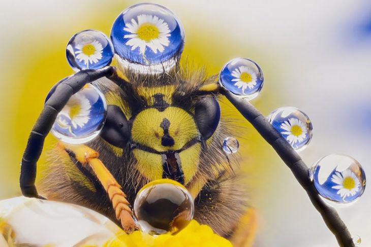 abeja con gotas de agua que reflejan las flores