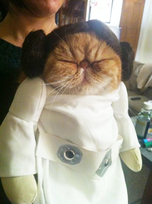 gato disfrazado de princesa leia