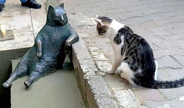 gato viendo estatua de gato