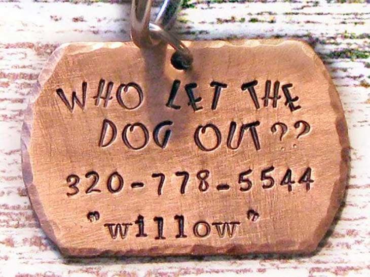 collar quién dejó salir al perro