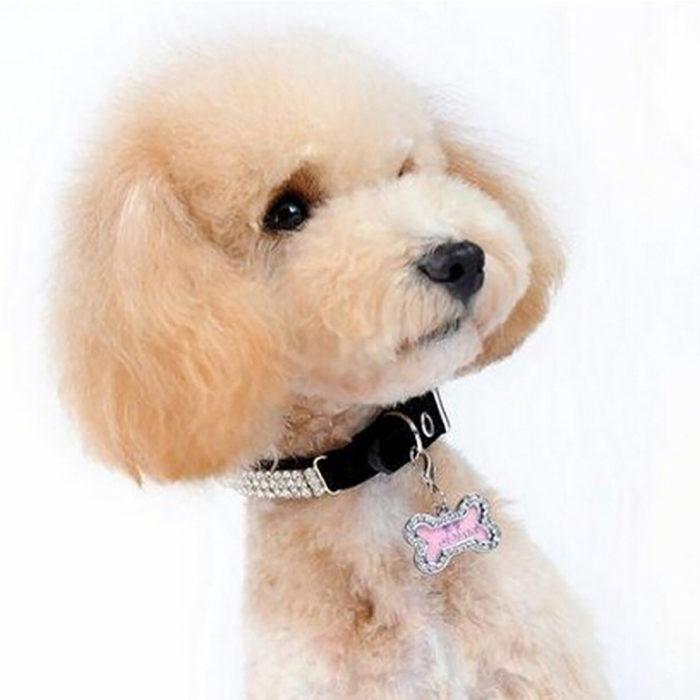 joyería para perro