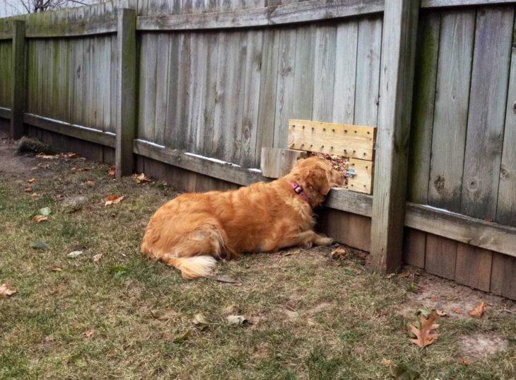 perro mirando a la casa del vecino a través de ventana en la barda