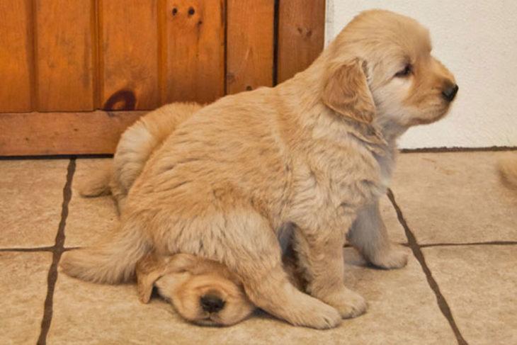 cachorrito arriba de otro cachorrito