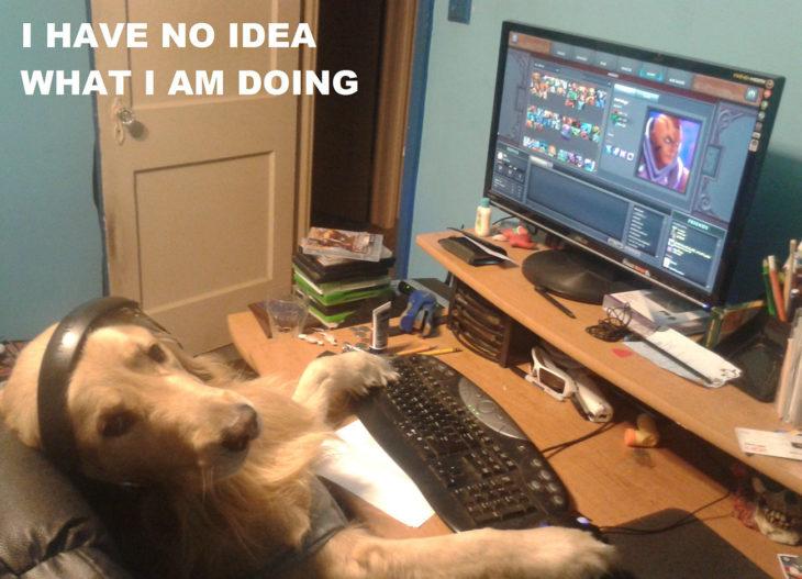 perro jugando un videojuego