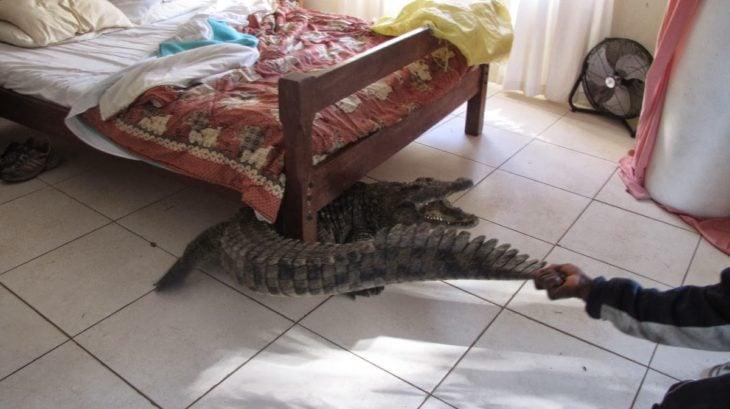 lagarto dentro de habitación