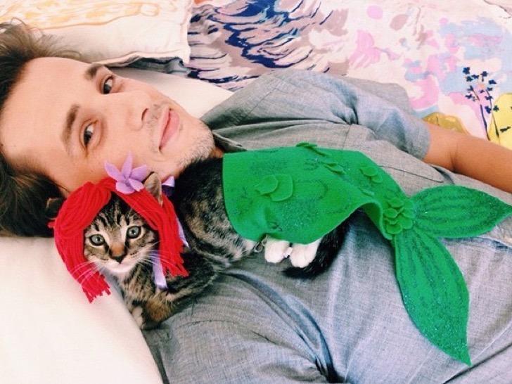 gato disfrazado de la sirenita