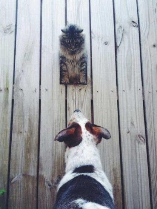 gato asomandose por la barda de un perro
