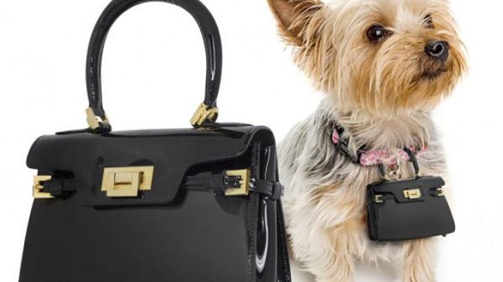 cartera para perro