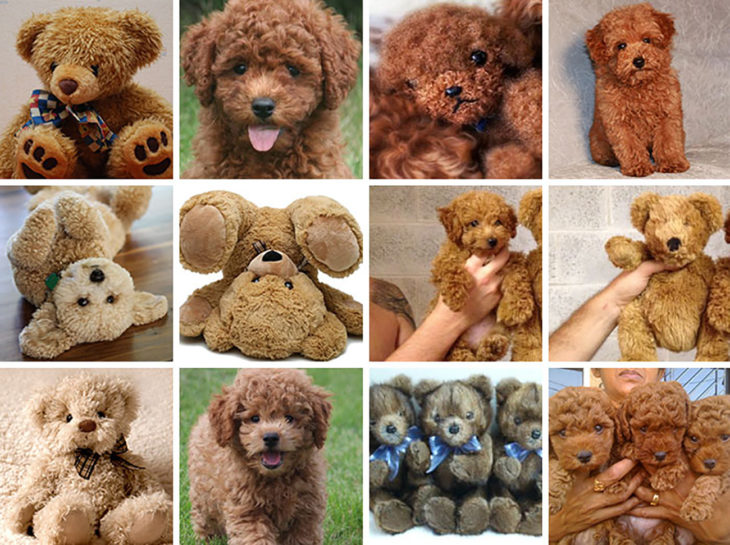 cachorros y osos de peluche